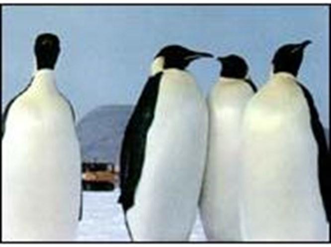 Eşcinsel penguenlere himaye